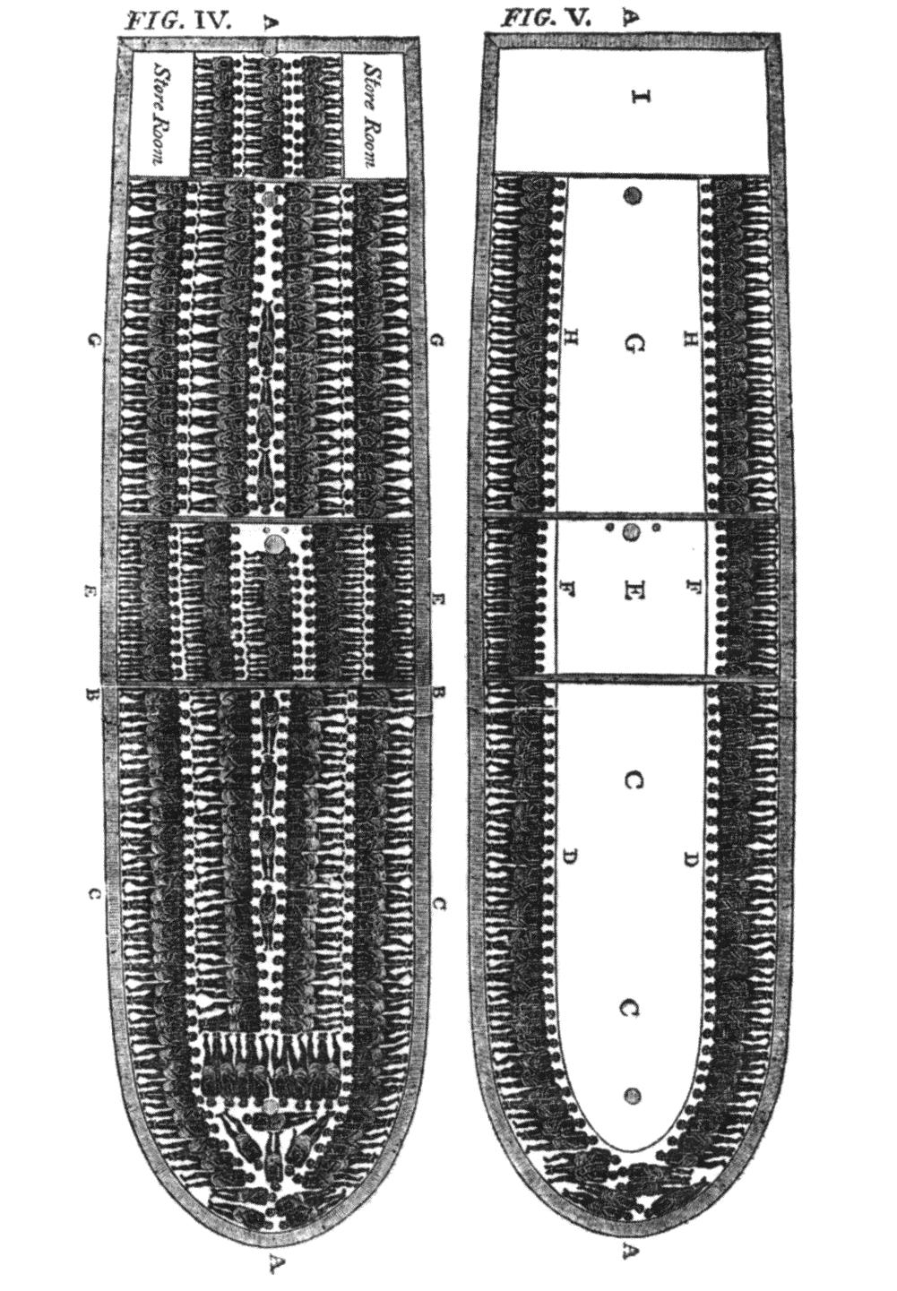 slave-ship-diagram